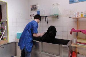 La Bande à Toutou - Dog Wash